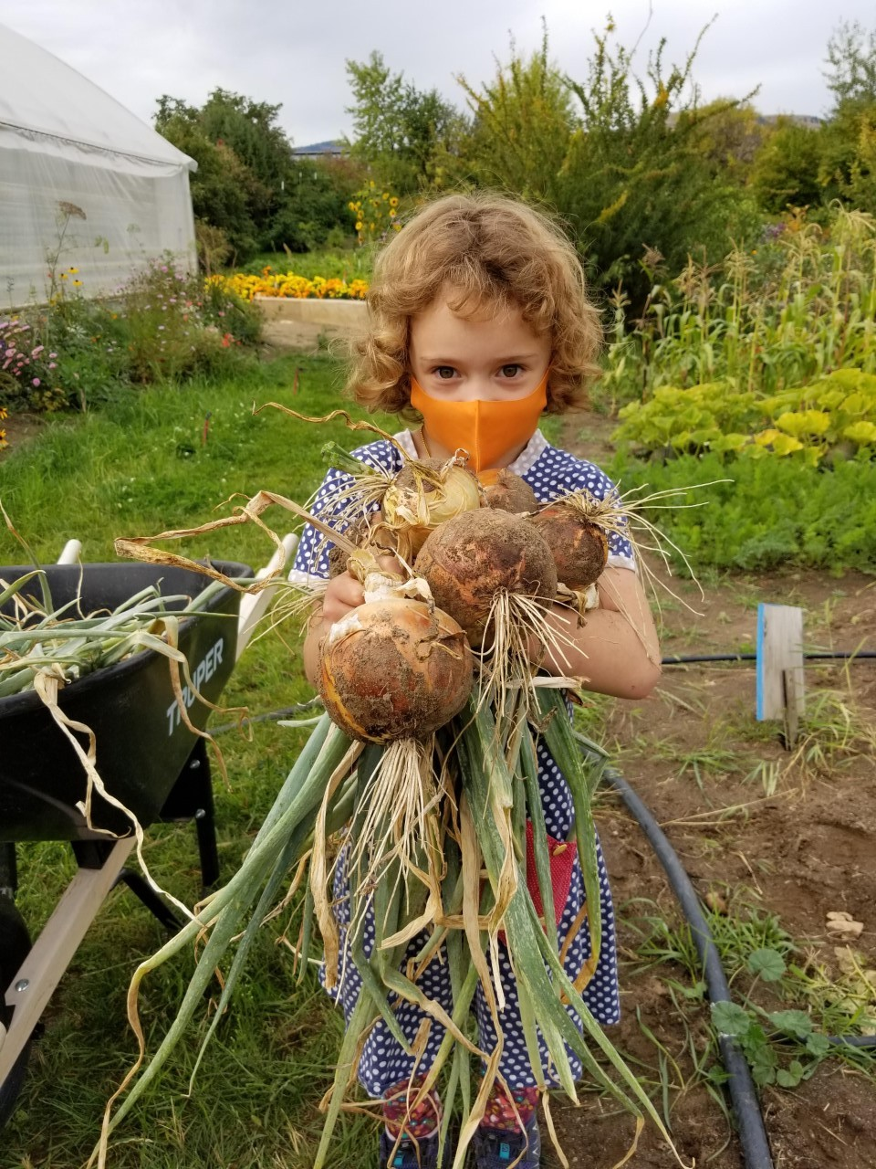 A young girl wearing a mask holds up a handful of root vegetables in a garden